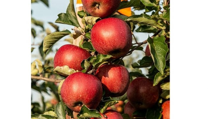Podar con coherencia para cosechar mejores frutos